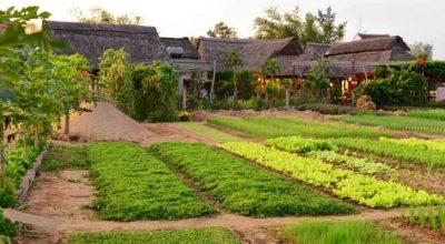 Visite autour de Hoi An