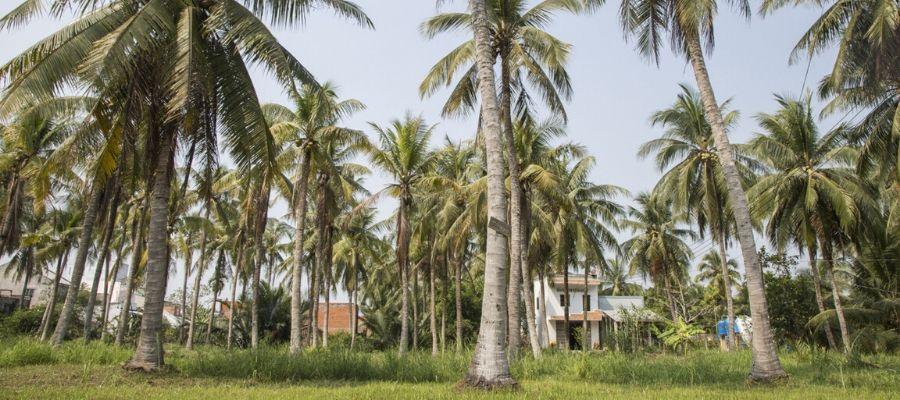 Circuit Ben Tre Can Tho Delta Mekong 3 jours Circuit au Vietnam
